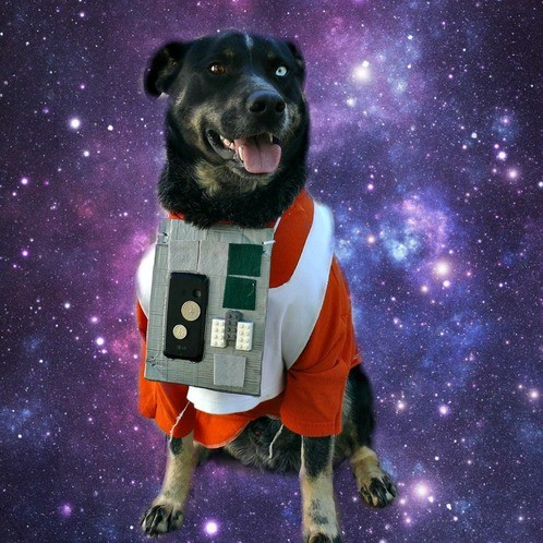 An X-Wing flight suit costume for a dog